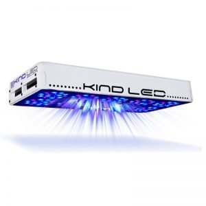 Kind LED K3 L600 Vegetative