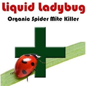 Liquid-Ladybug