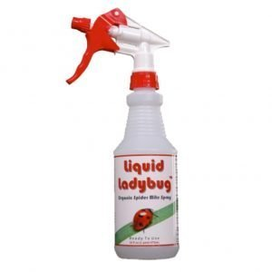 Liquid-Ladybug-Ready-to-Use