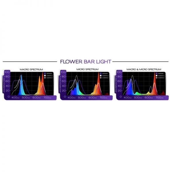 kind-flower-bar-spectrum