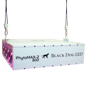 Black Dog LED Phyto Max 2 800 laying down