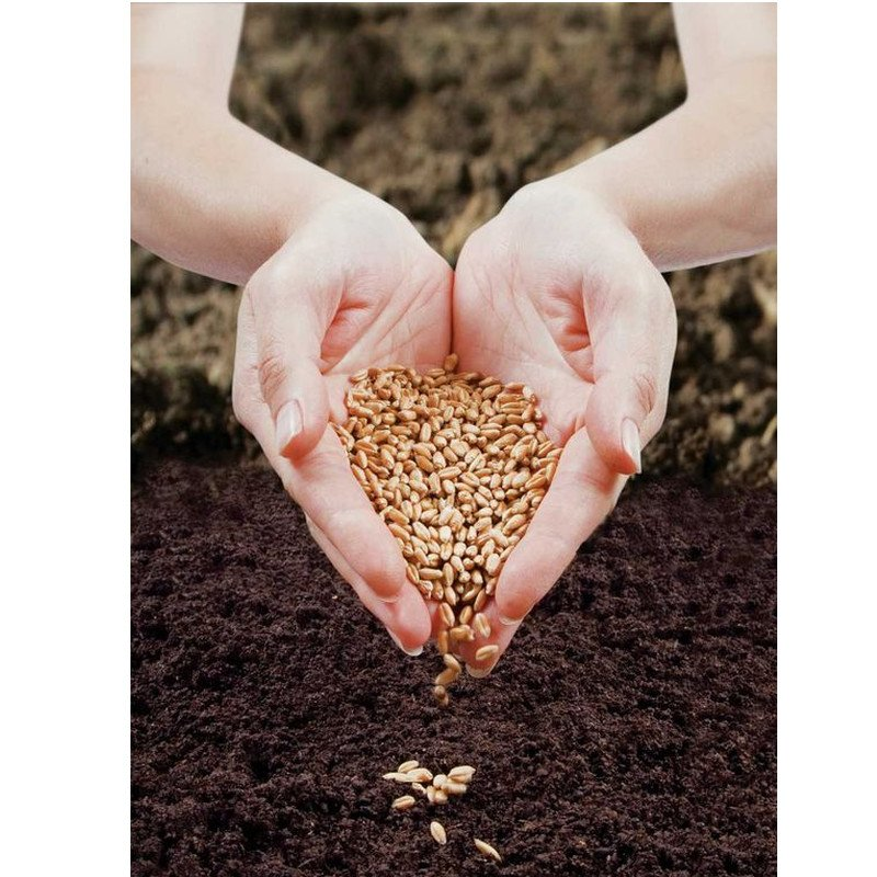 how to germinate seeds